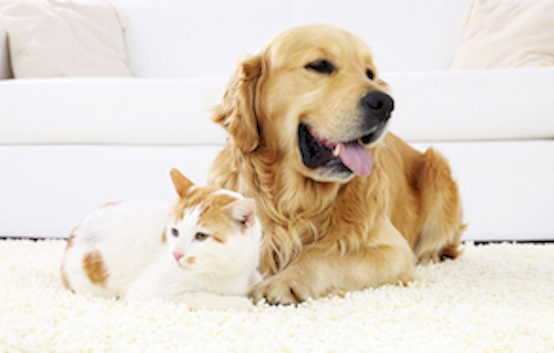 Fighting allergies caused by furry friends