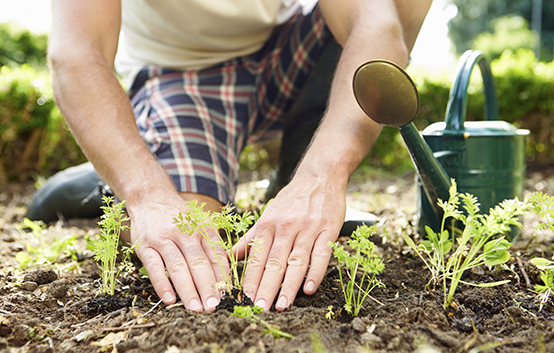Gardening safety: Keep the aches away